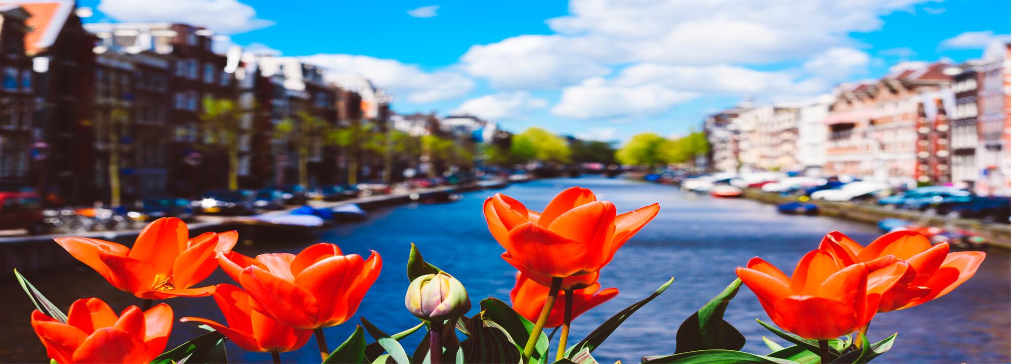 Tulipány na mostě v Amsterdamu.
