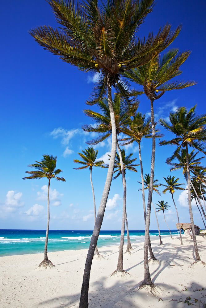 Vzrostlé palmy na pláži
