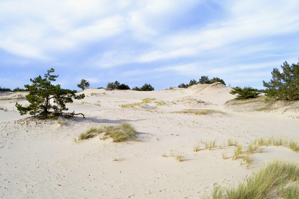 Písečné duny na severu Polska.