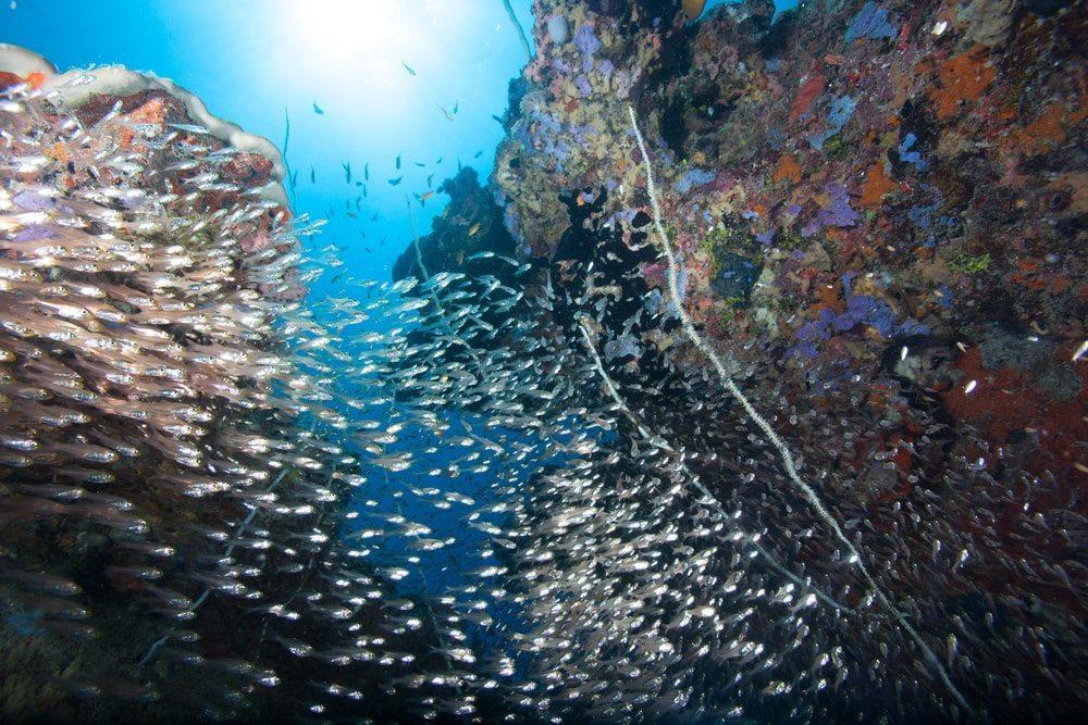Podmořská fauna