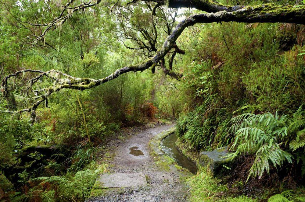 Madeirský les.