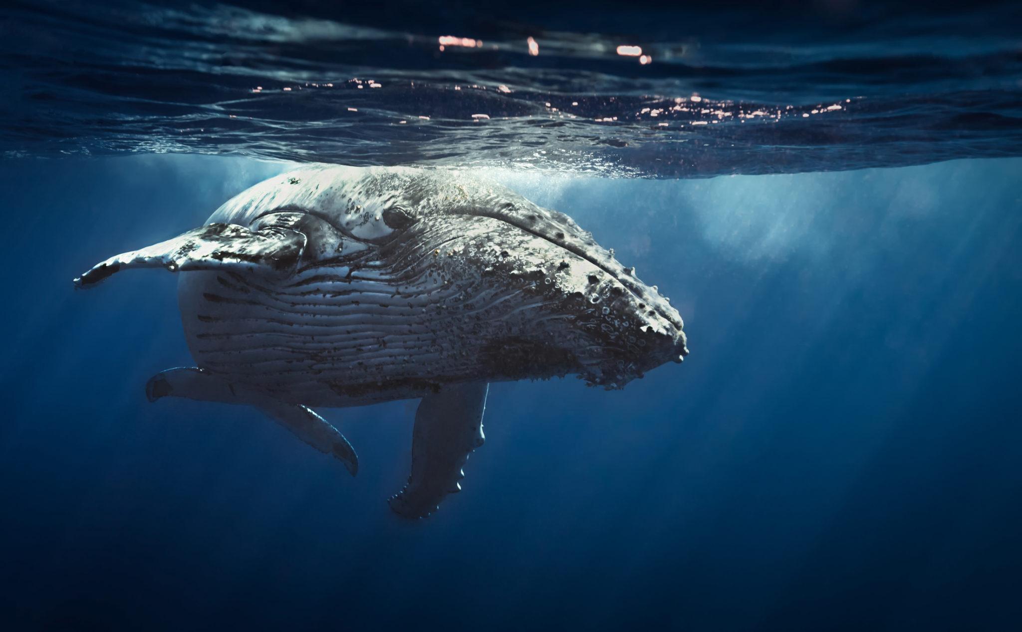 Velryba v pceánu