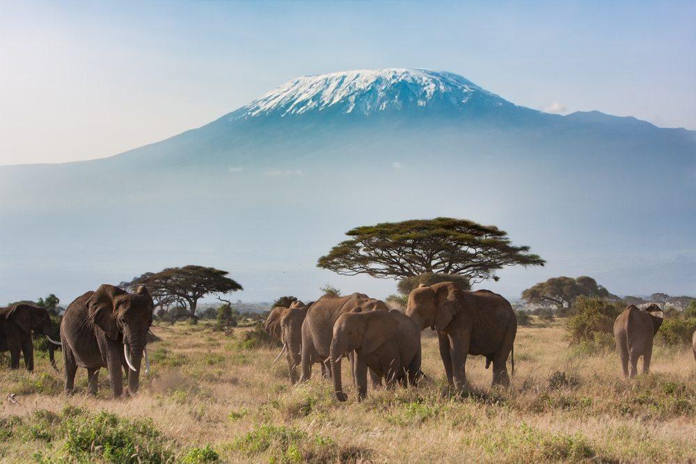 Sloni v Tanzanii