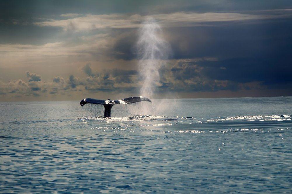 Velrybí ocas v oceánu.