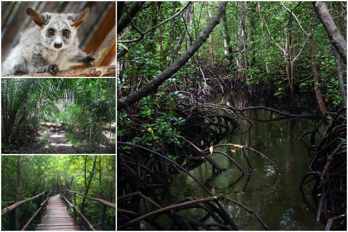 Mangrovové porosty