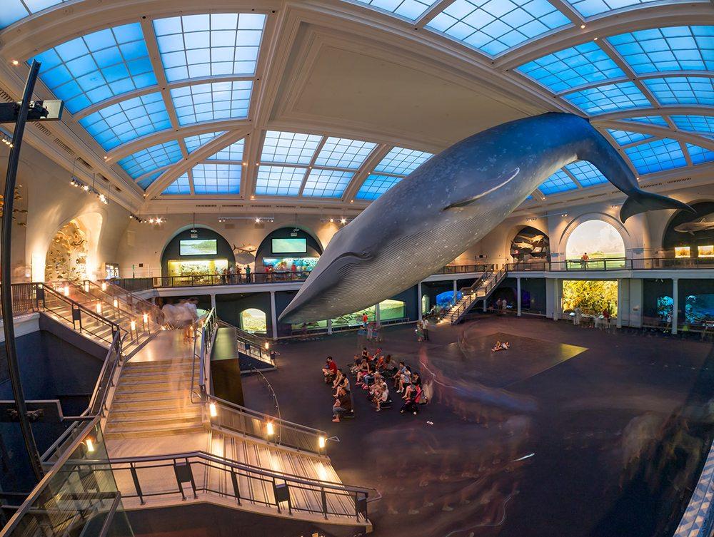Přírodovědné muzeum v New Yorku.