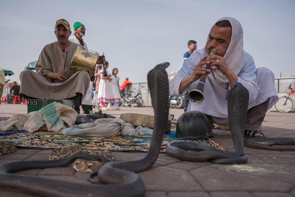 Krotitelé hadů na náměstí Jemaa el-Fnaa.