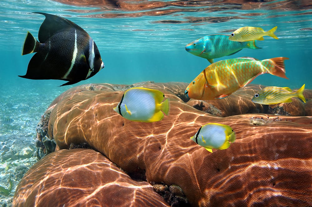 Pestrobarevné ryby v Karibském moři.
