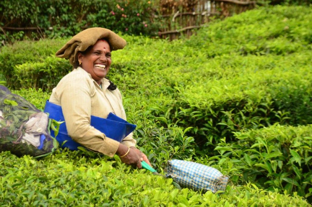 Sběračka čajových lístků v Munnaru