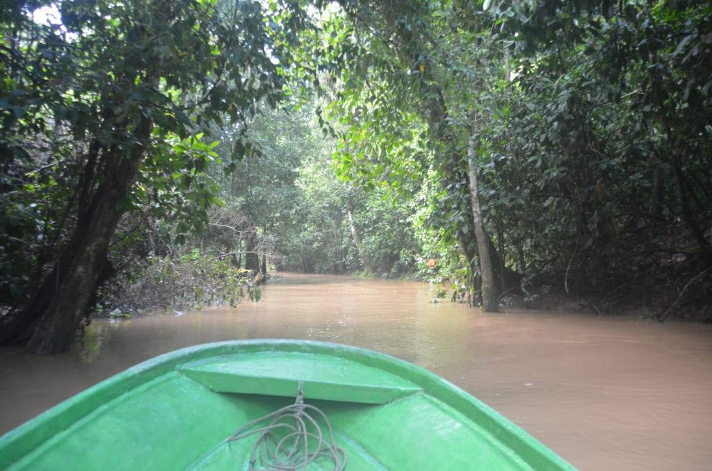 Projížďka po řece Kinabatangan