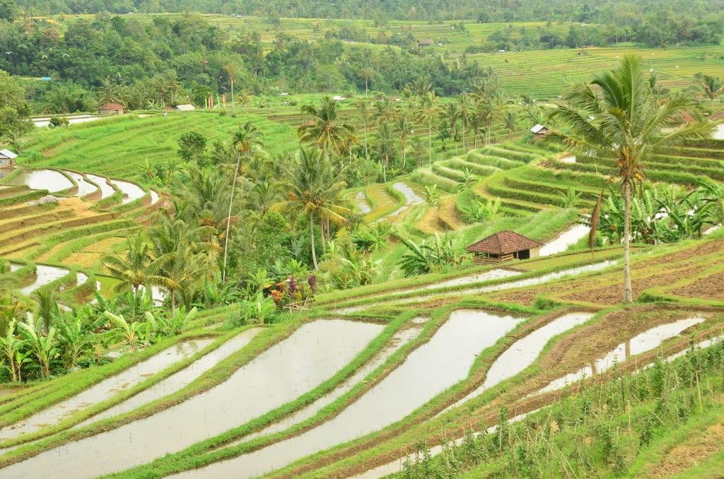 Příroda na Bali je kouzelná