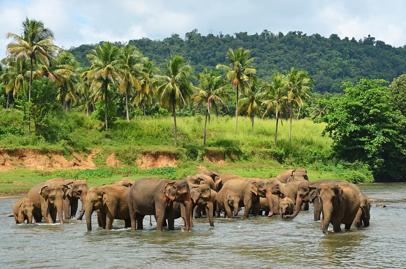 Srí Lanka je pravý ráj na zemi!