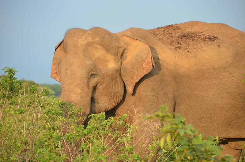 Národní park Udawalawe