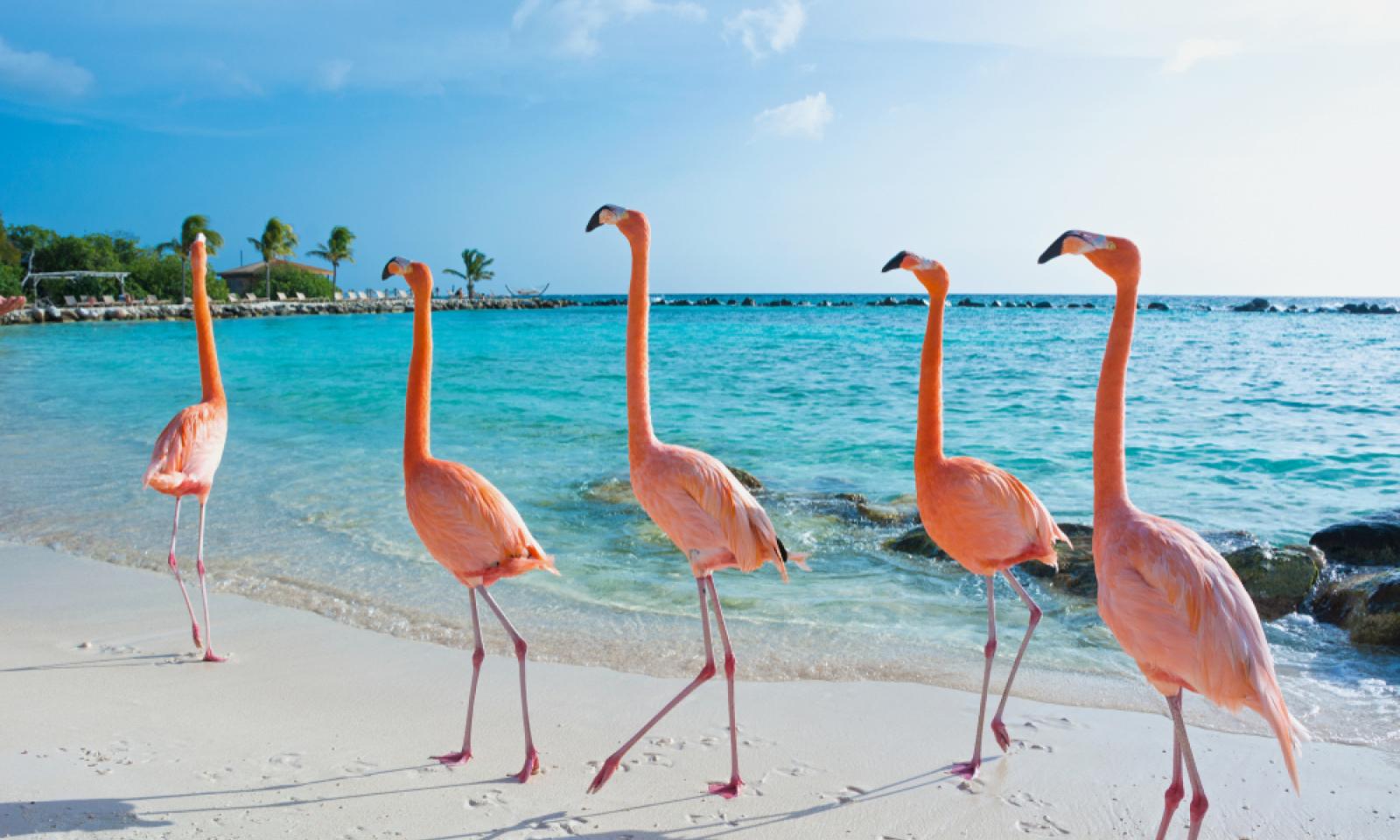 Plaměňáci na pláži