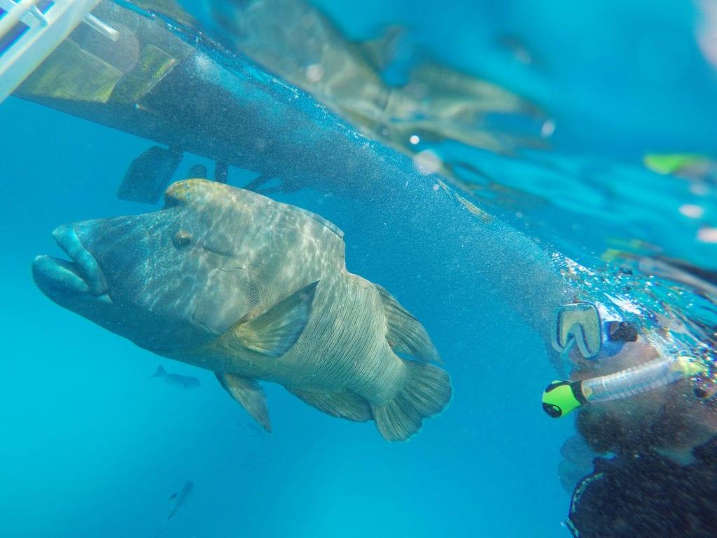 Potápění u Velkého bariérového útesu láká turisty z celého světa