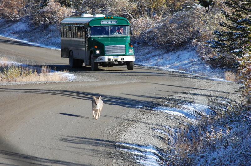Autobus v národním parku Denali