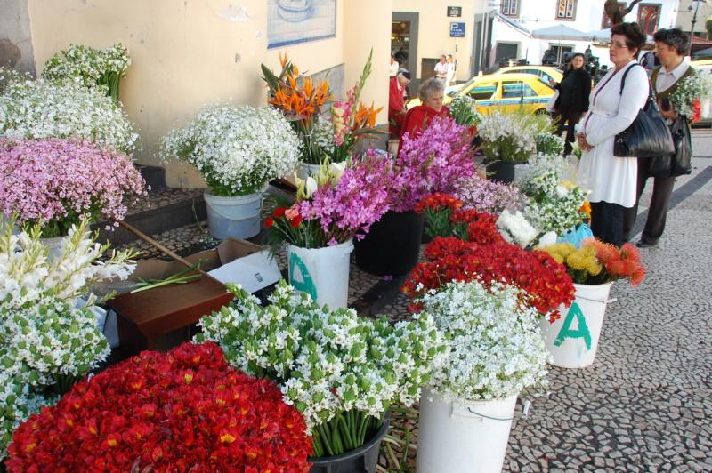 Madeira je květinovým rájem