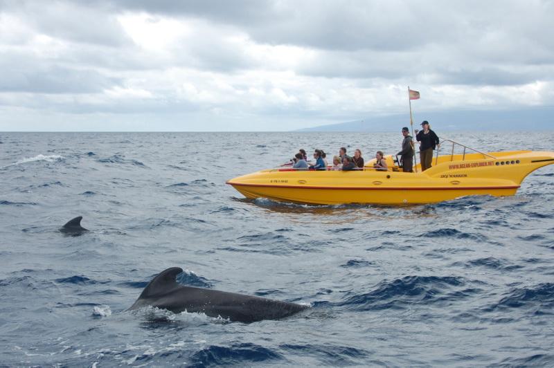 Tenerife je skvělým místem na pozorování delfínů a velryb