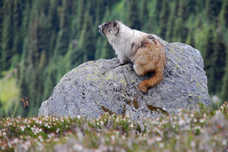 Příroda je v Kanadě krásně divoká