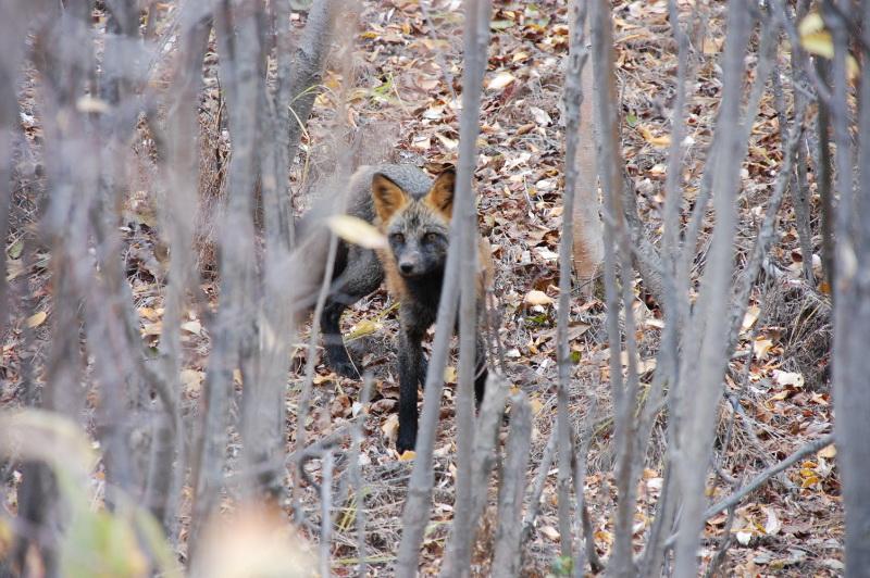 Na Yukonu potkáš hodně divokých zvířat