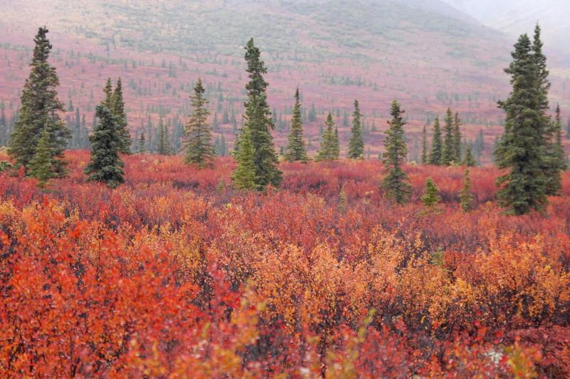 Úchvatné podzimní barvy na Aljašce