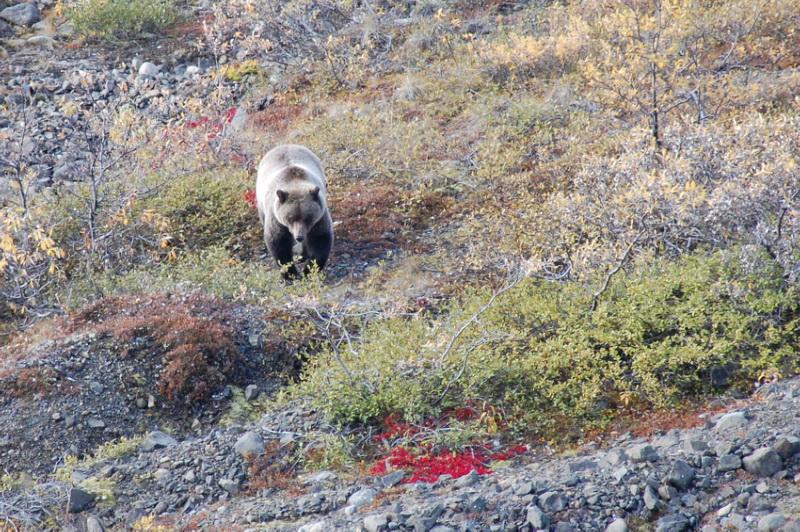 Aljaška a Yukon jsou rájem všech trampů a dobrodruhů