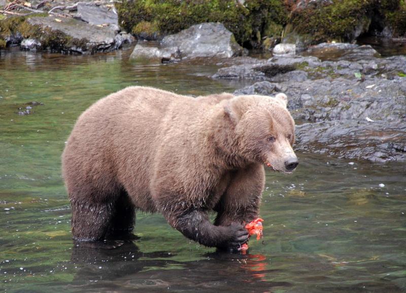 Před medvědy se měj v Kanadě na pozoru!