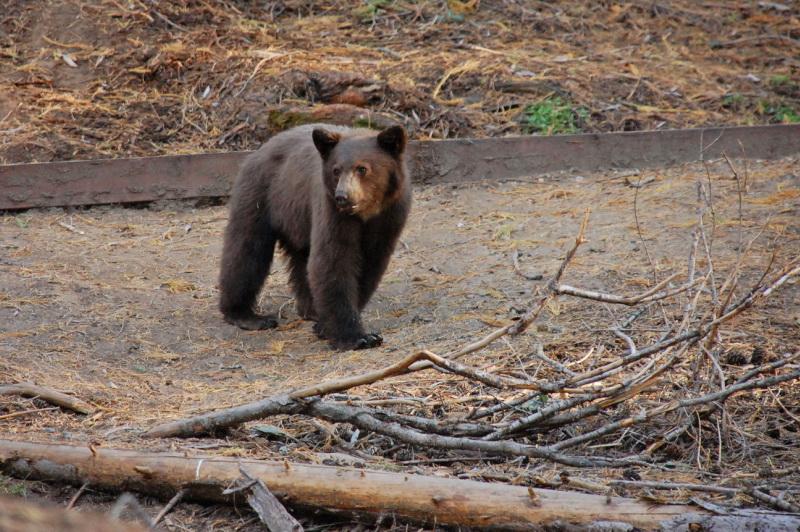 Národní park Sequoia a jeho obyvatelé