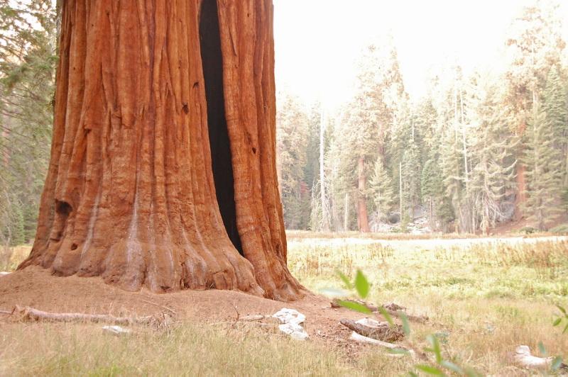 Stromy jsou tu opravdu největší na světě