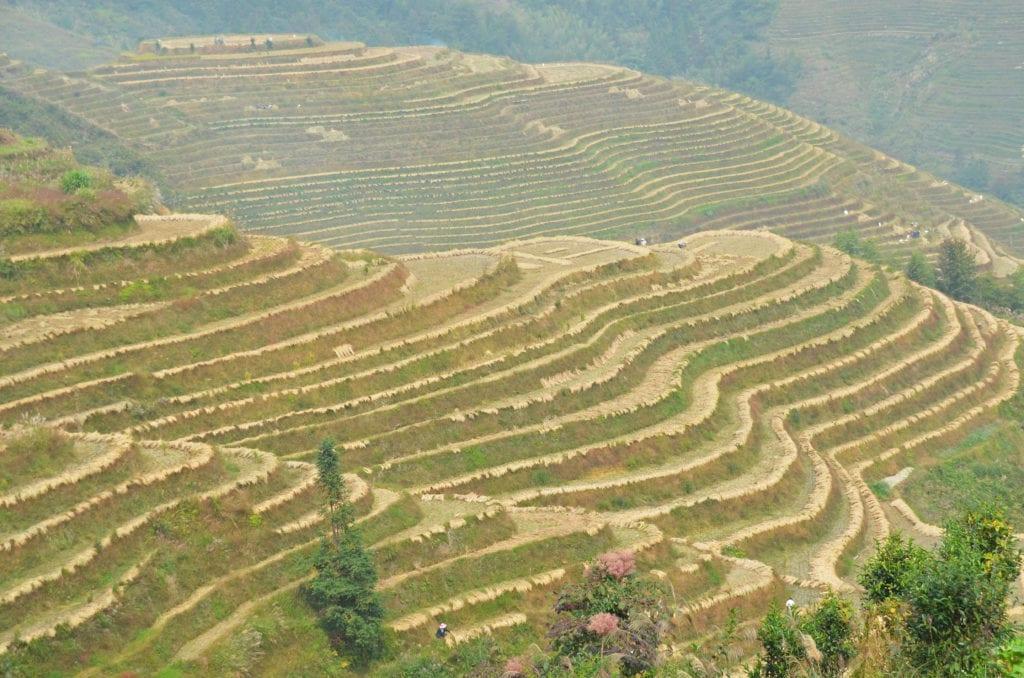 Jedinečné rýžové terasy Dračí páteře