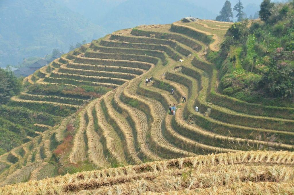 Rýžová políčka se šplhají až do vysokých kopců