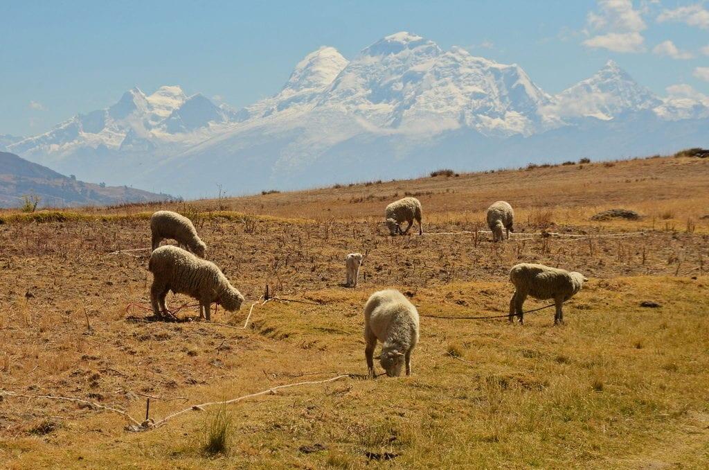 Pohled na pohoří Cordillera Blanca od  laguny Wilcacocha za městem