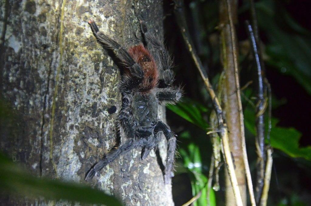 V Amazonském pralese potkáš nejrůznější živočichy