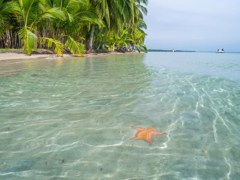 Panama a teplé Karibské moře skrývají nádherný podmořský život