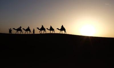 Velbloudí karavana v poušti.