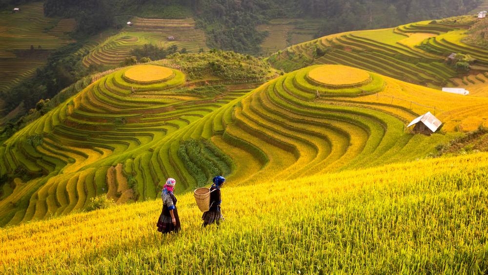 Rýžové terasy ve Vietnamu ti vezmou dech
