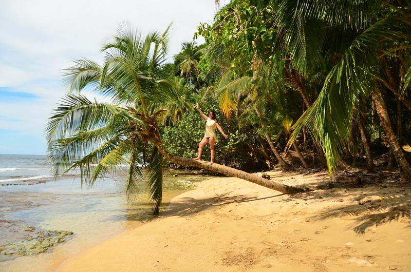 Kostarika palma