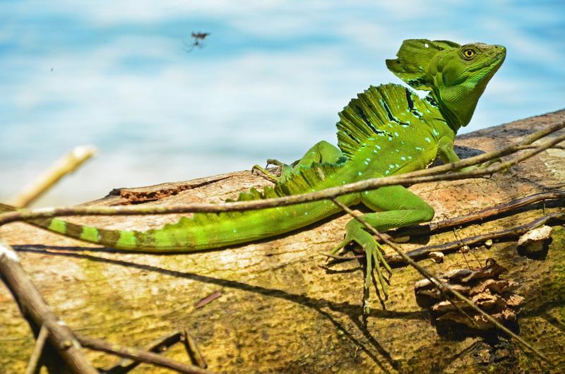 Kostarika - tropický ráj