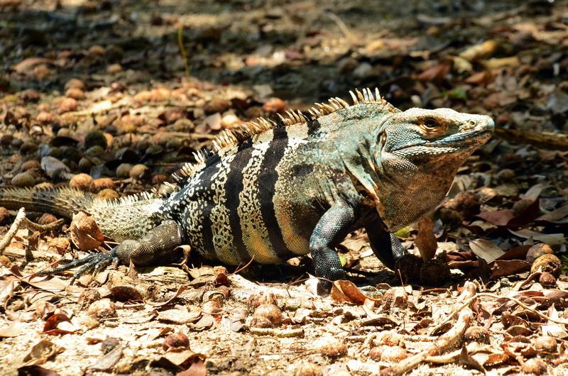 Exotická zvířata na tebe čekají na každém kroku