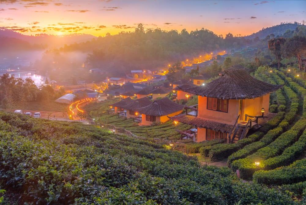 čajové plantáže v Thajsku