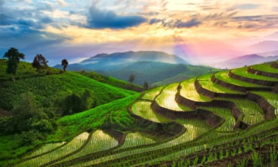 Rýžová pole v Chiang Mai v Thajsku