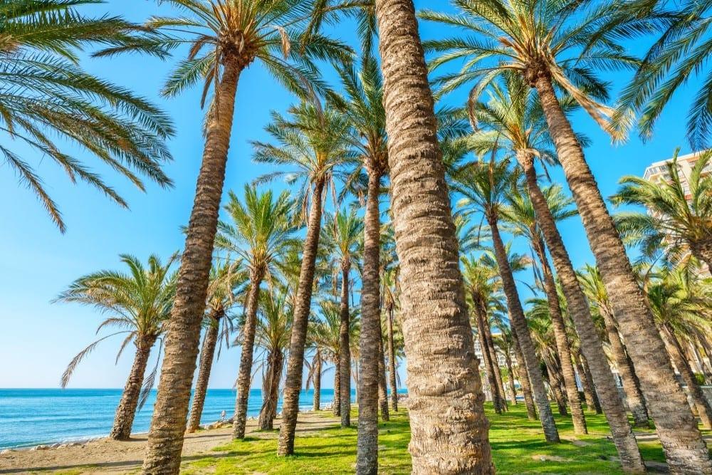 Palmy na pláži, formulář do Španělska