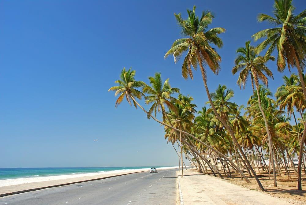 Palmy v Ománu