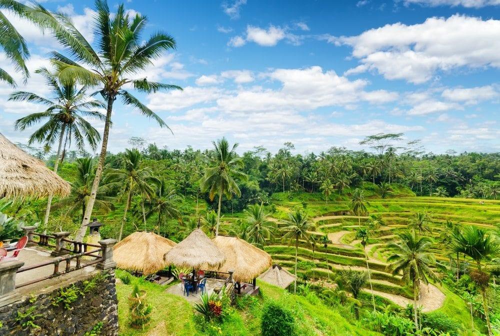 Bali, rýžová pole