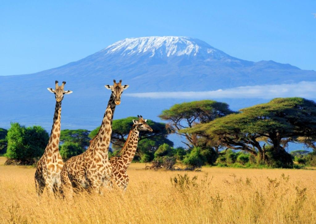 Keňa, safari