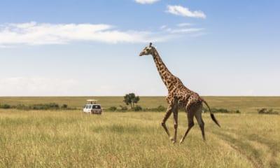 Safari v Nairobi, Keňa, Afrika