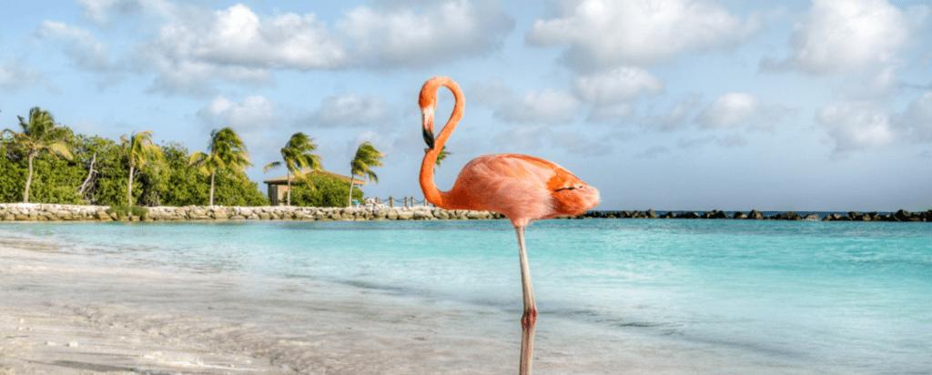 Kam bezpečně cestovat za koronaviru, otevřené země, Aruba