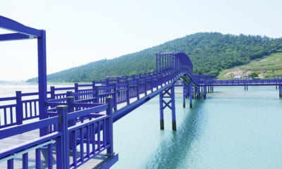 Fialové ostrovy Jižní Korea