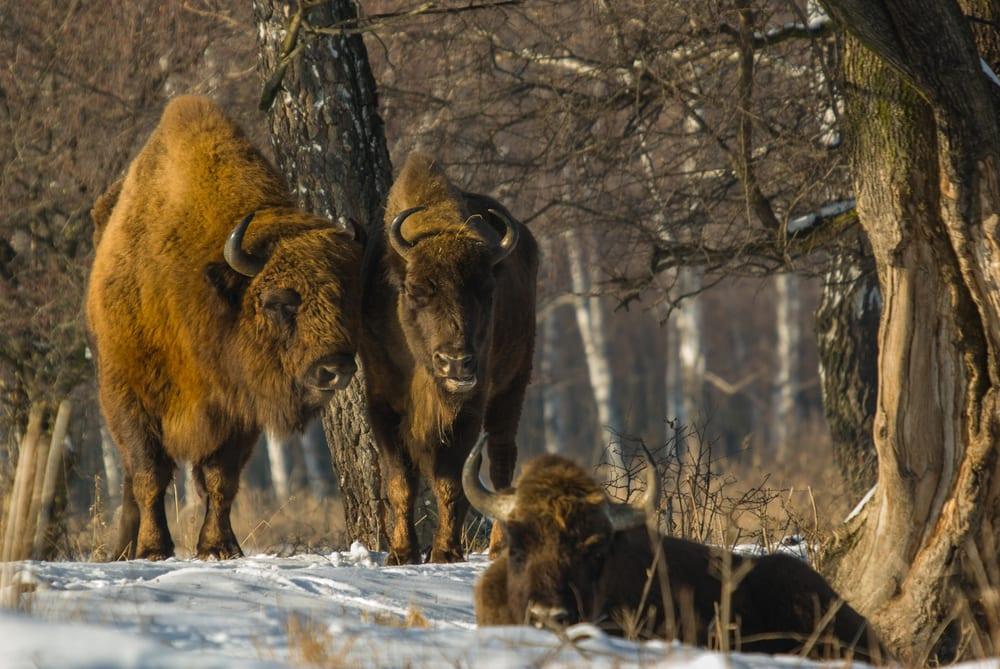 Slovensko, Unesco, karpatské bukové pralesy