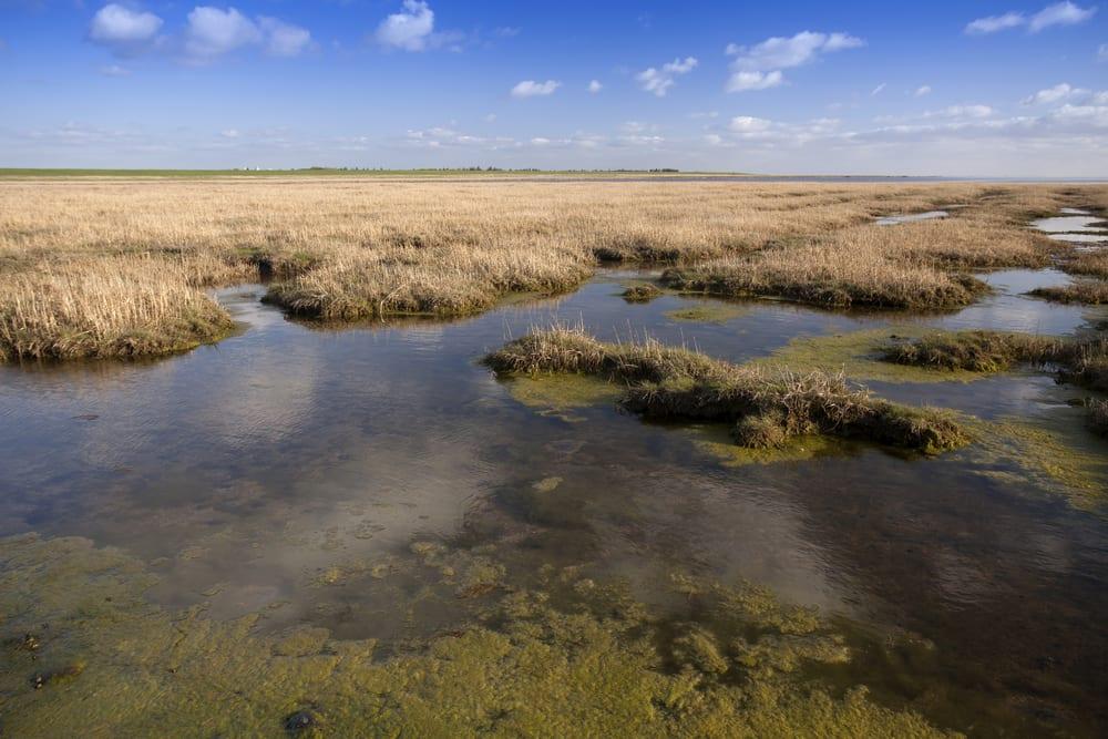 Wadden Sea Dánsko